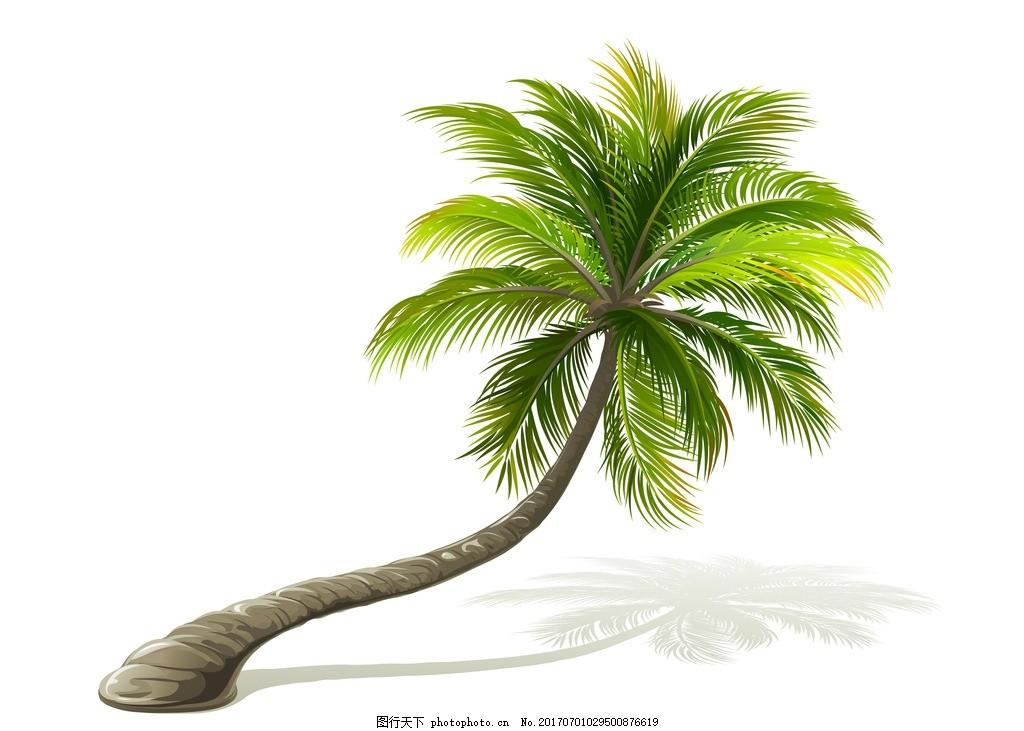 椰子树 树 海树 椰子 海边的树 设计 其他 图片素材 白底 夏天 夏天