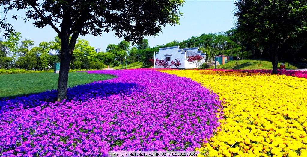 花海 花朵 鲜花 草地 草坪 公园 大树 树木 树荫 花草 繁花似锦