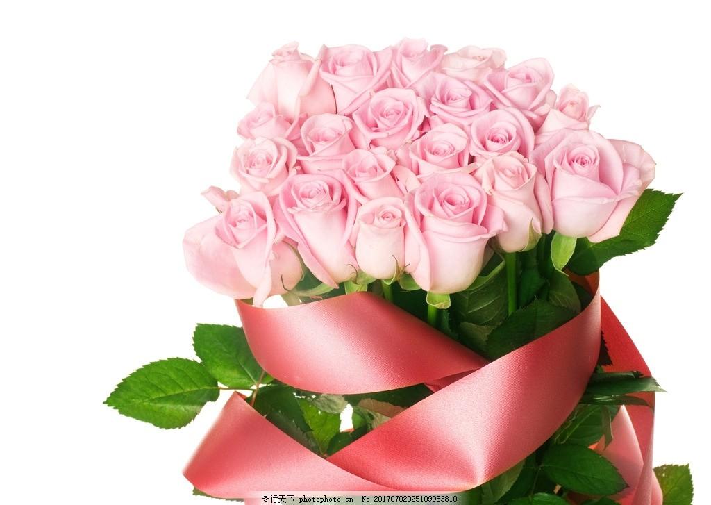 玫瑰 唯美 植物 自然 鲜花 花朵 花卉 玫瑰花 摄影图片