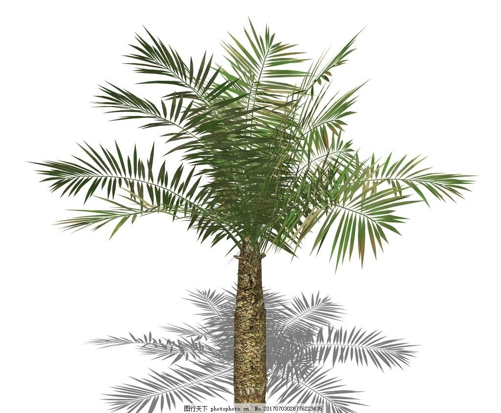 su植物模型 棕榈芭蕉 蒲葵 棕竹 椰子树 景观设计 植物素材