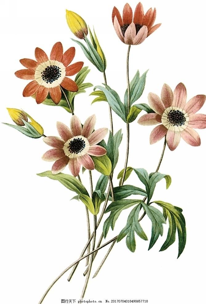 手绘花朵 花纹 手绘 花 底纹 装饰 色彩 水彩 设计 动漫动画 风景漫画