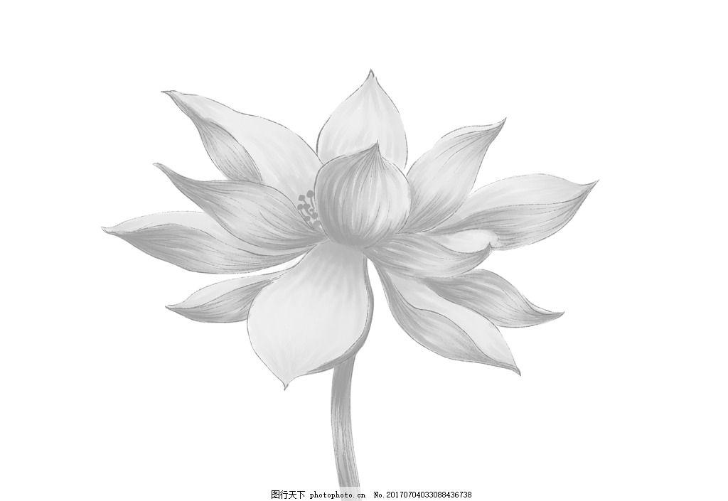 手绘荷花 手绘 荷花 线稿 黑白 水墨 莲花 夏天 清凉 花 植物 清高