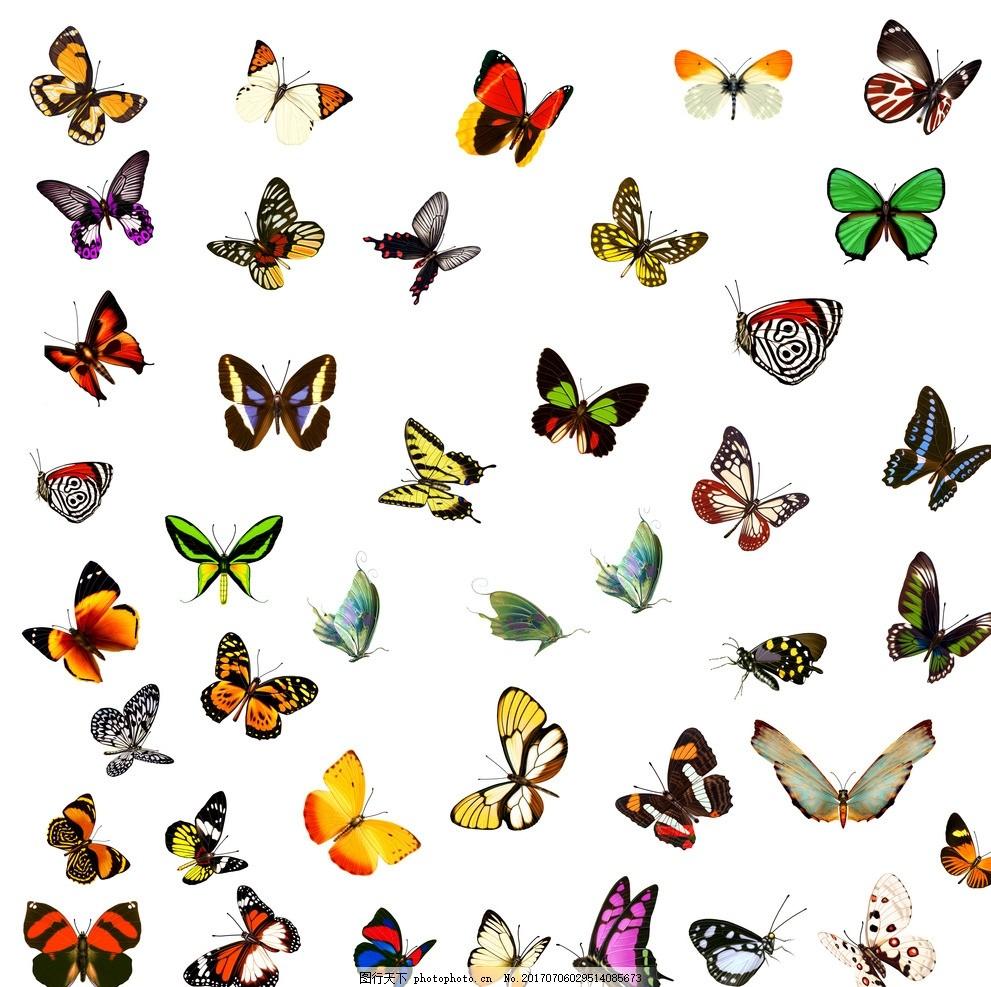 蝴蝶素材 蝴蝶 很多蝴蝶 小蝴蝶 美丽的蝴蝶 可爱的蝴蝶 卡通 设计