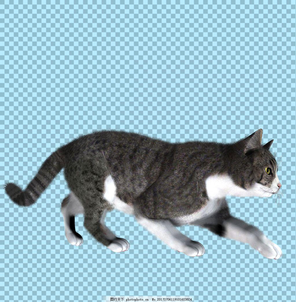 正在走路的猫图片免抠png透明图层素材 猫科动物 可爱动物图片