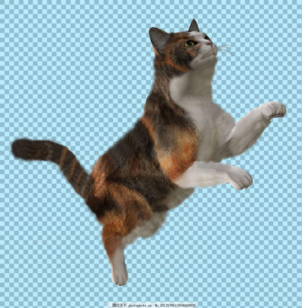 跳跃的小猫图片免抠png透明图层素材 猫科动物 可爱动物图片 家禽