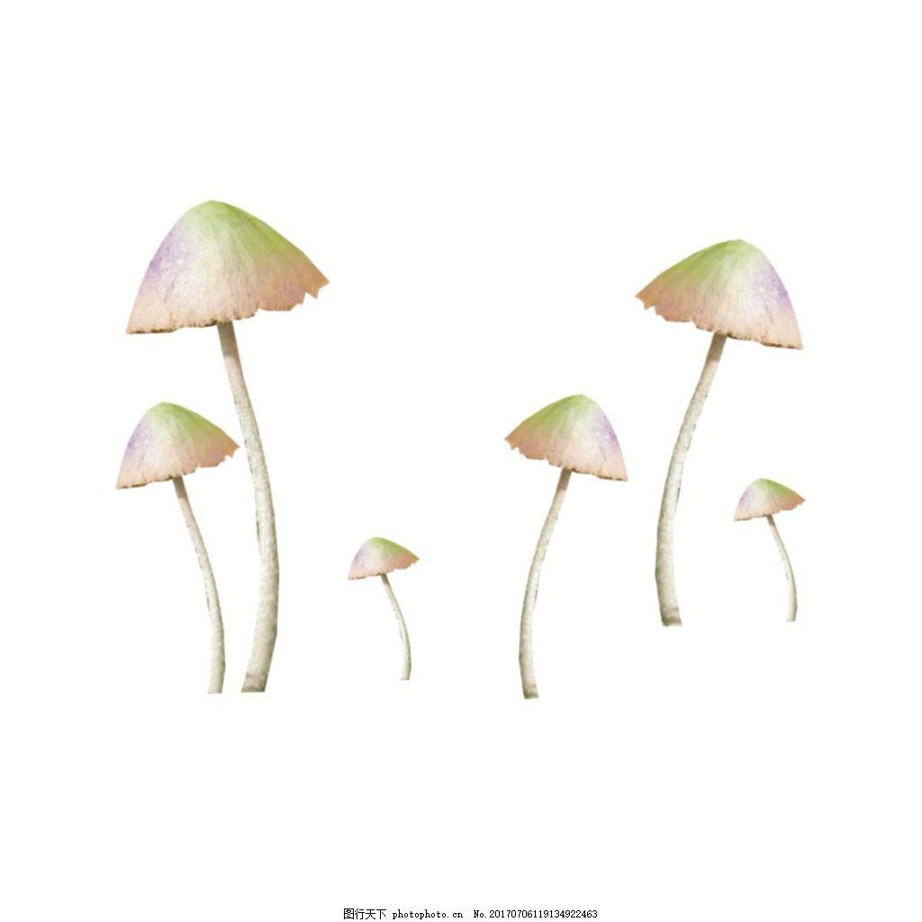 实物蘑菇元素 菌类 食物 蔬菜 森林