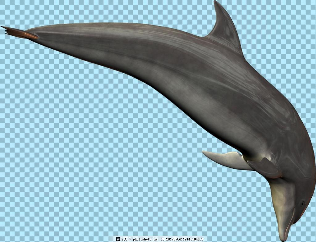 在水里游的海豚图片免抠png透明图层素材 海洋动物 可爱动物图片 家禽