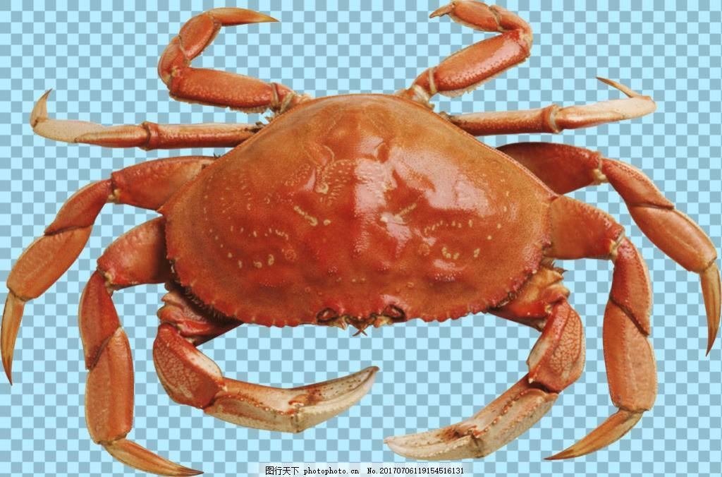 褐色螃蟹图片免抠png透明图层素材 海鲜动物 可爱动物图片 家禽 家畜