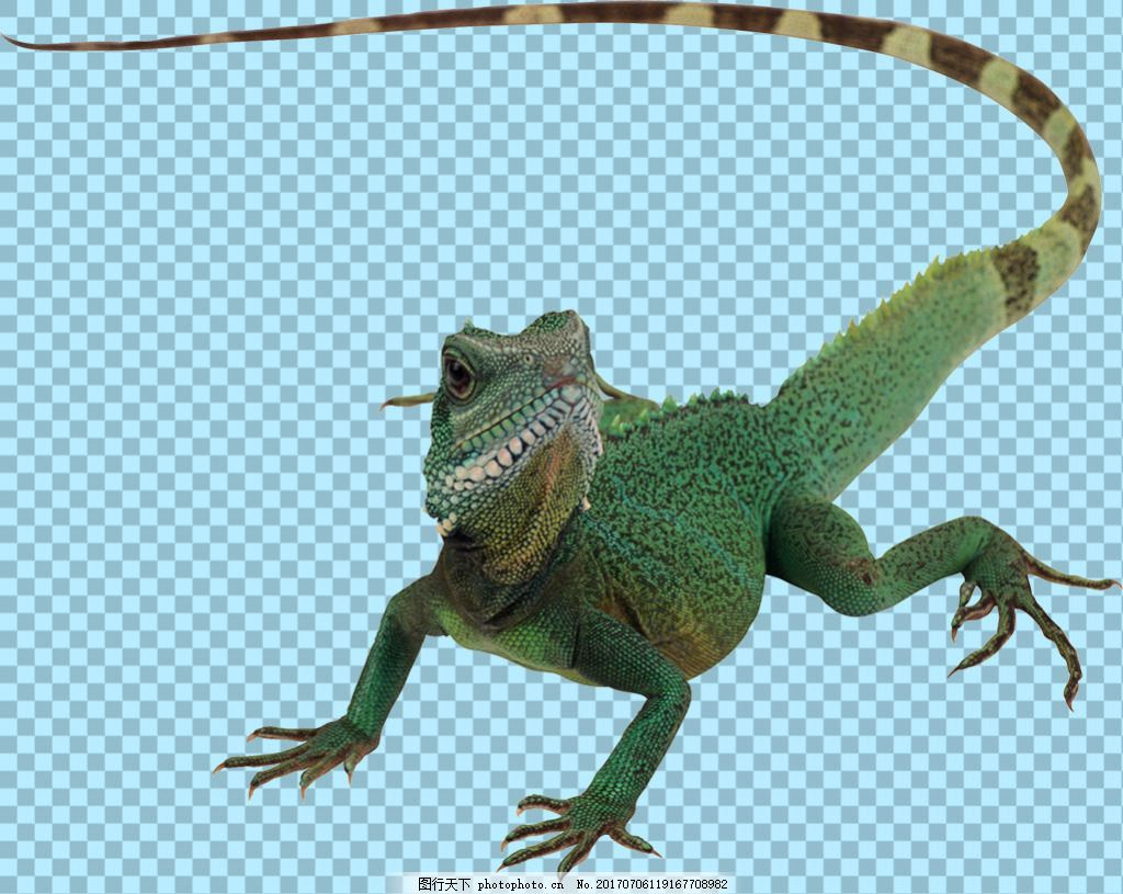 蜥蜴免抠png透明图层素材 爬行动物 可爱动物图片 家禽 家畜 动物大全