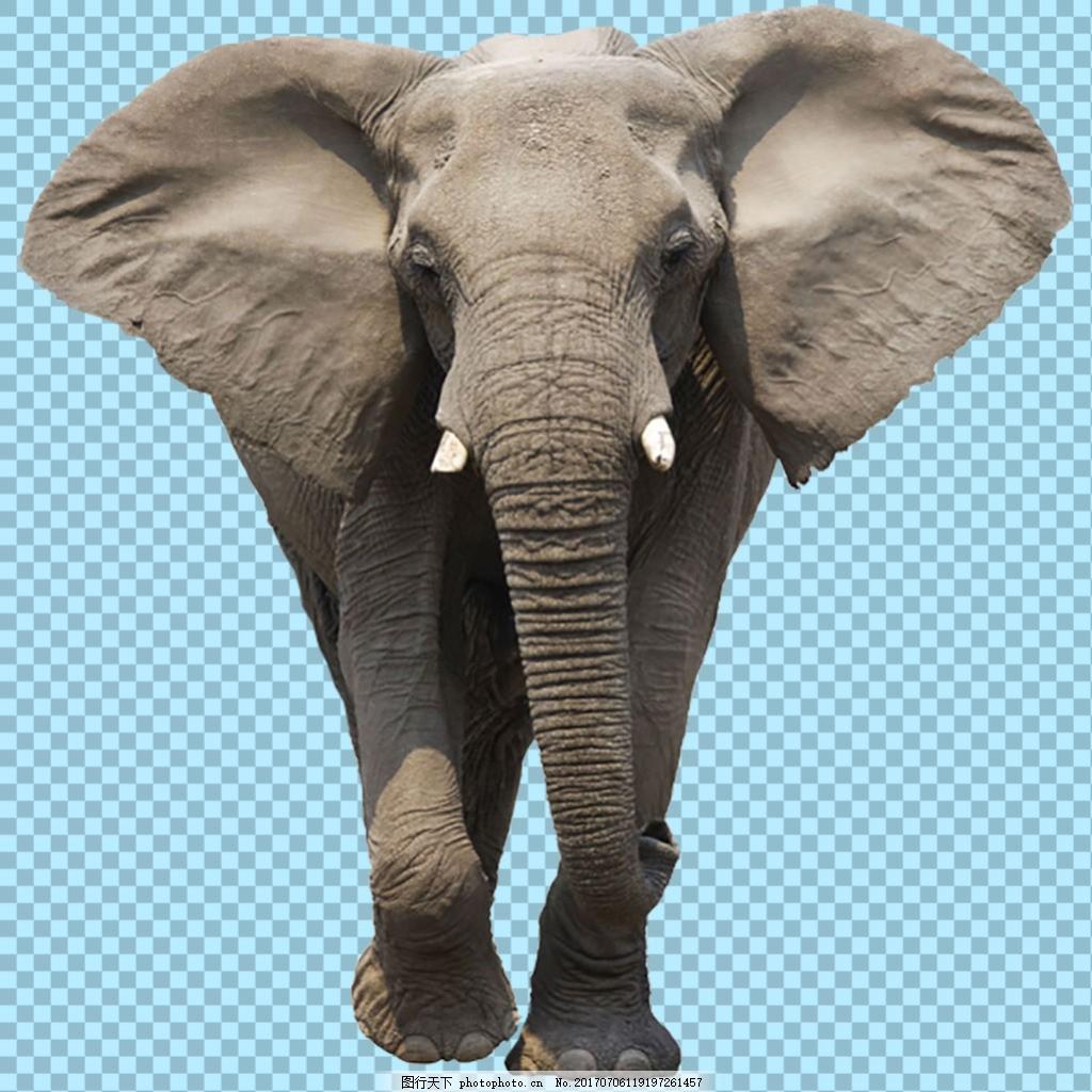 正在走路的大象图片免抠png透明图层素材