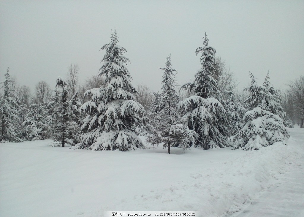 雪景 冬天雪景 树林 街道雪景 脚印 校园雪景 小区雪景 风景
