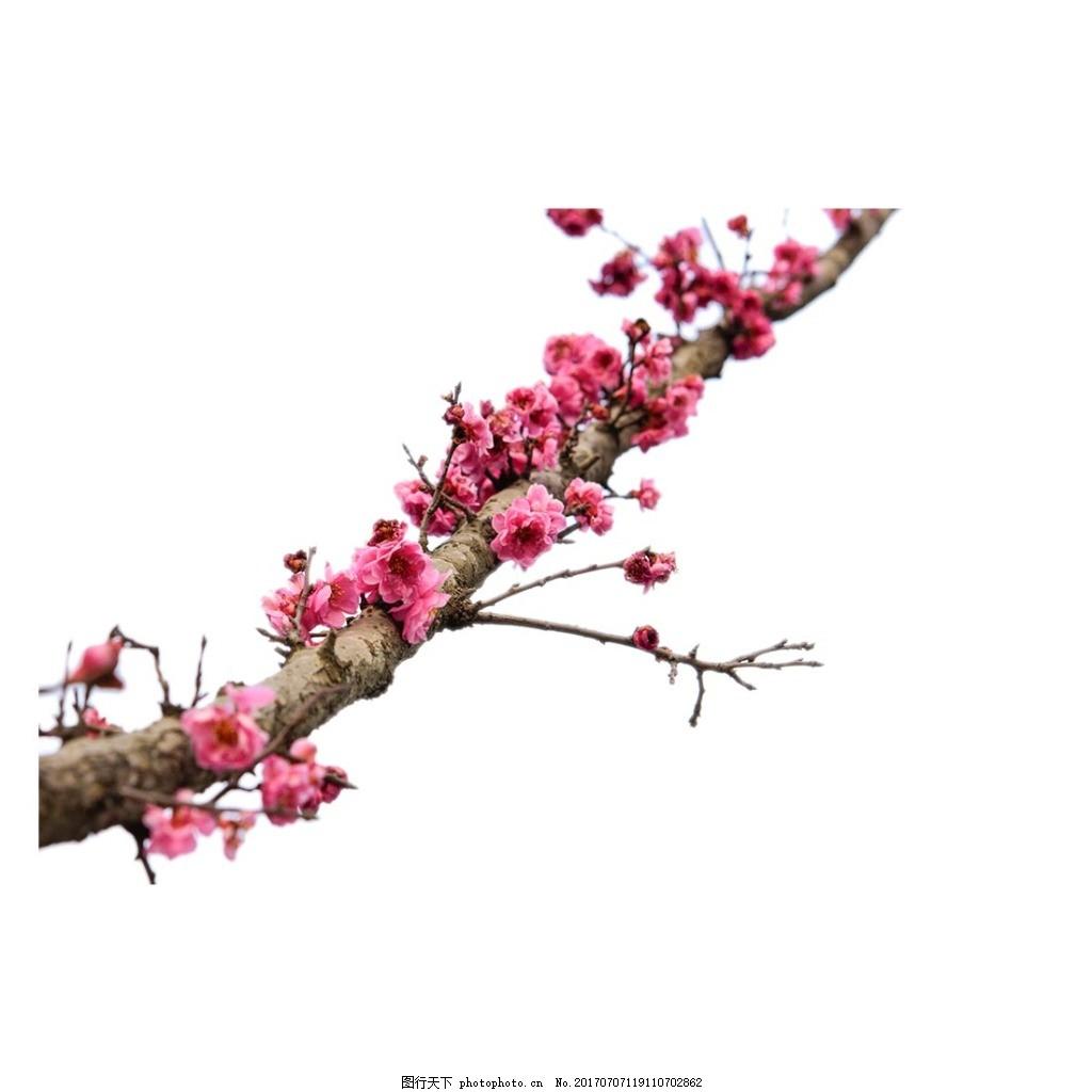 粉色梅花树枝元素