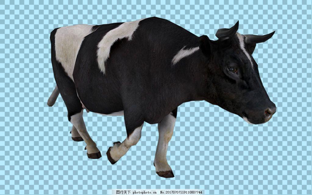 黑白颜色奶牛图片免抠png透明图层素材 家畜动物 可爱动物图片 家禽