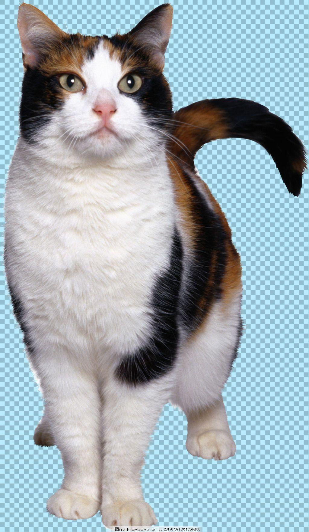 站立可爱小猫图片免抠png透明图层素材