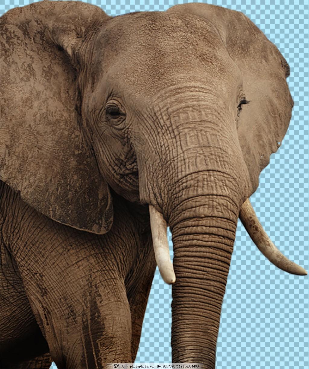 棕色大耳朵大象图片免抠png透明图层素材