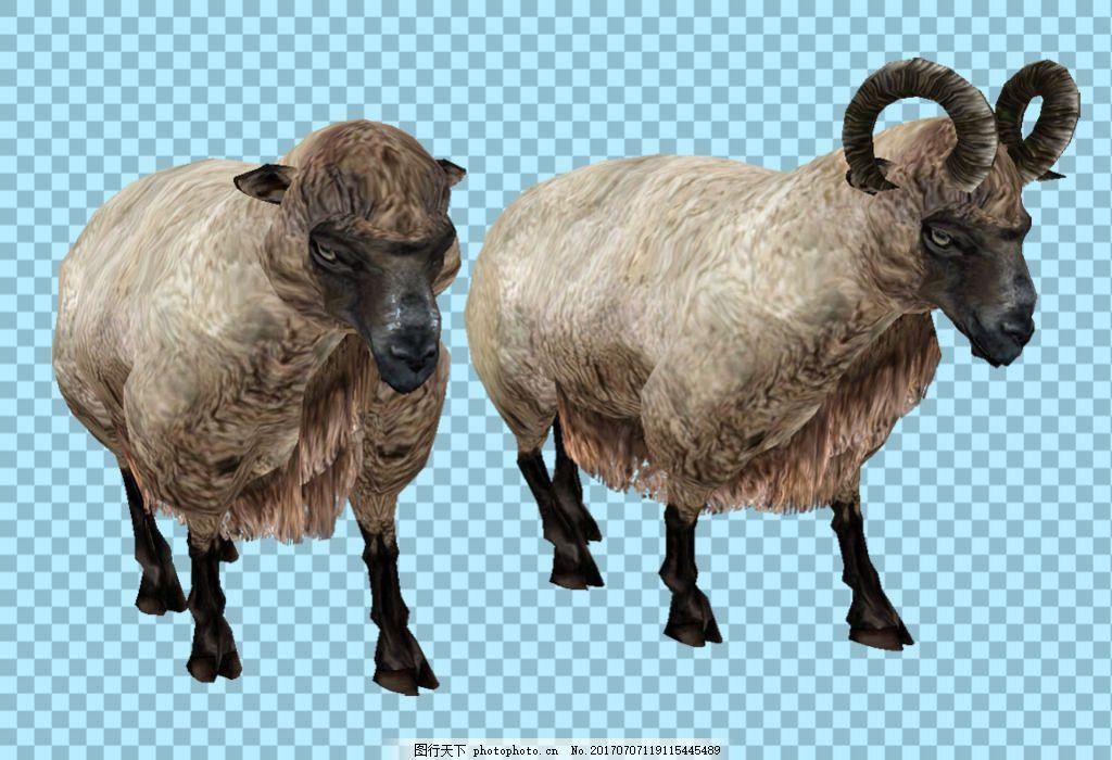 两只绵羊图片免抠png透明图层素材 动物图片大全 可爱动物图片 家禽