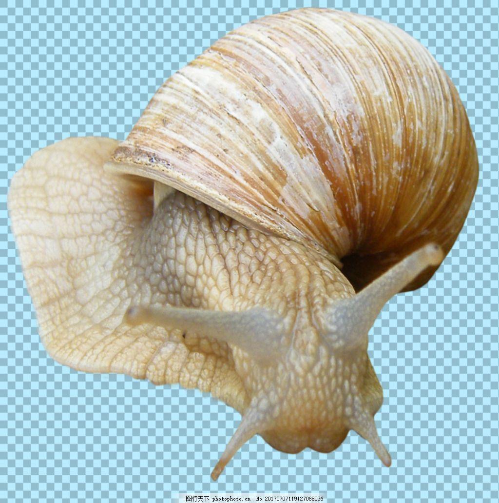 真实的蜗牛图片免抠png透明图层素材 动物图片大全 可爱动物图片 家禽
