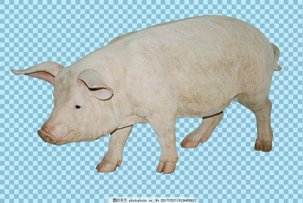 一只大猪免抠png透明图层素材 家畜动物 可爱动物图片 家禽 家畜 动物