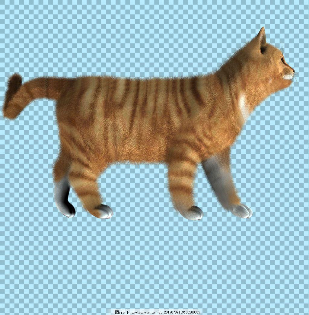 可爱侧面的猫图片免抠png透明图层素材