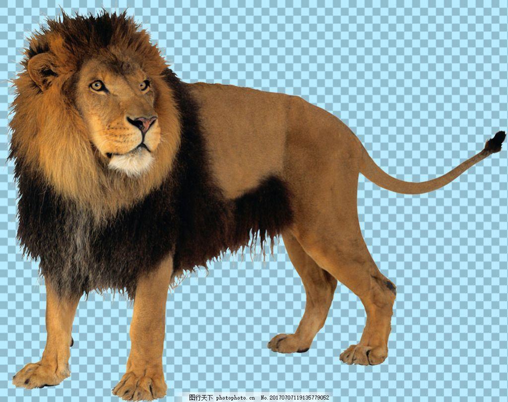 棕色的狮子免抠png透明图层素材 野生动物 可爱动物图片 家禽