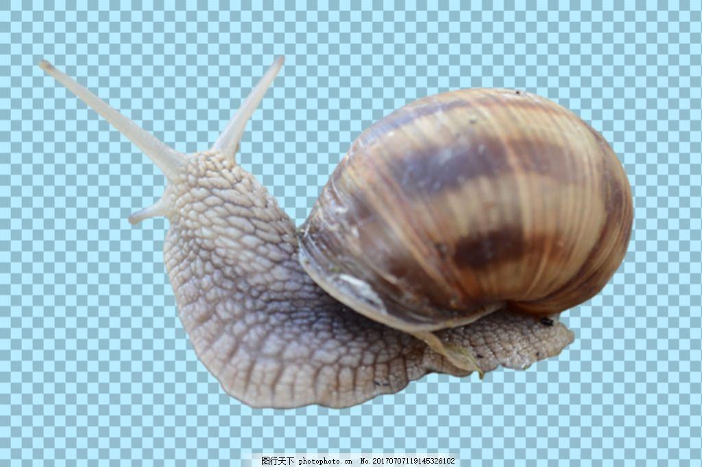 软体动物蜗牛免抠png透明图层素材