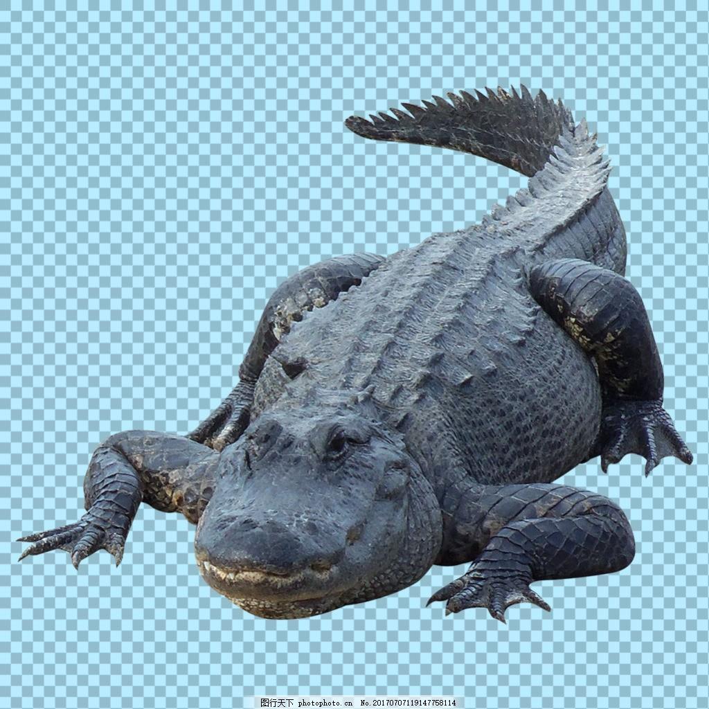 趴着的鳄鱼图片免抠png透明图层素材 动物图片大全 可爱动物图片 家禽