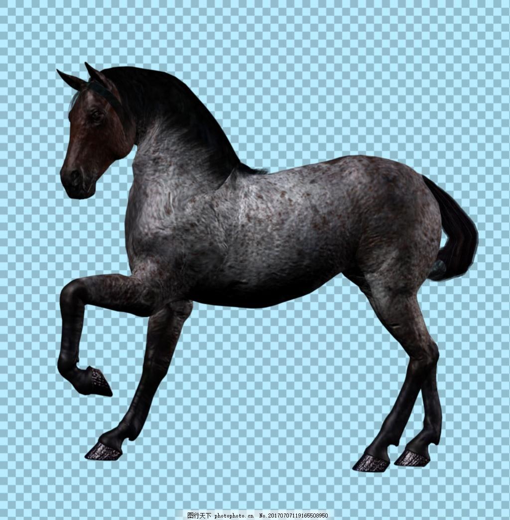抬蹄子的马免抠png透明图层素材 家畜动物 可爱动物图片 家禽