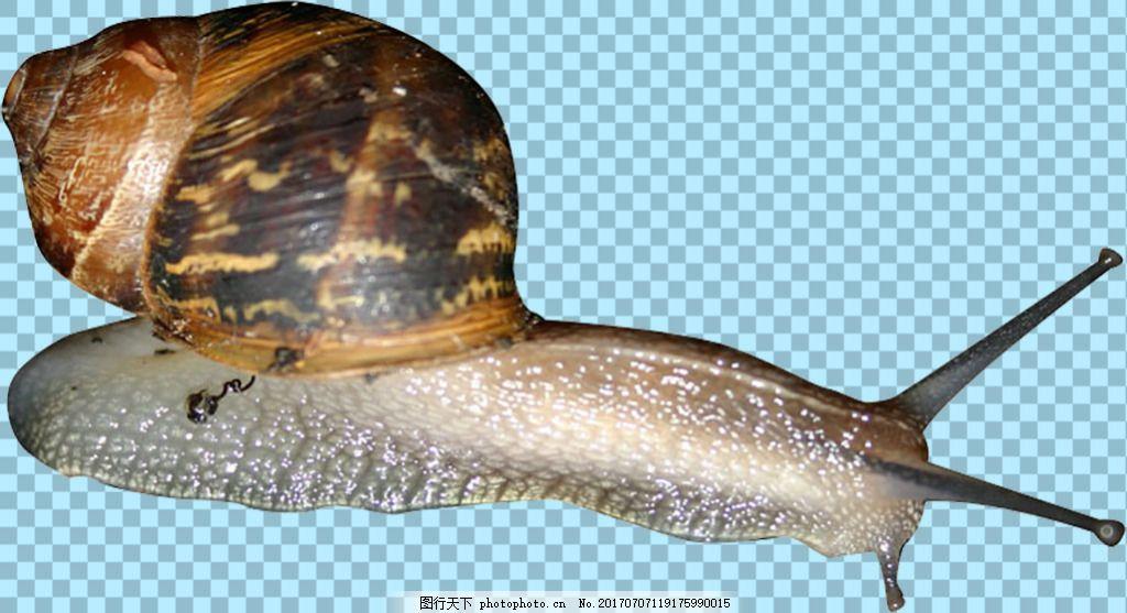 爬行的蜗牛免抠png透明图层素材 动物图片大全 可爱动物图片 家禽