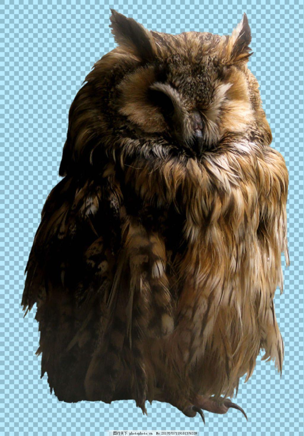 可爱动物图片 家禽 家畜 动物大全 野生动物 世界上最萌的动物 可爱