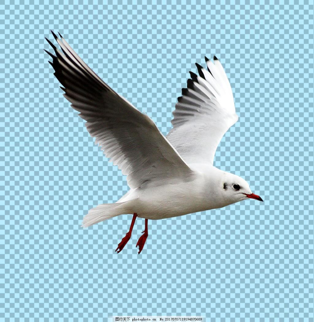 飞翔的海鸥免抠png透明图层素材 鸟类动物 可爱动物图片 家禽 家畜
