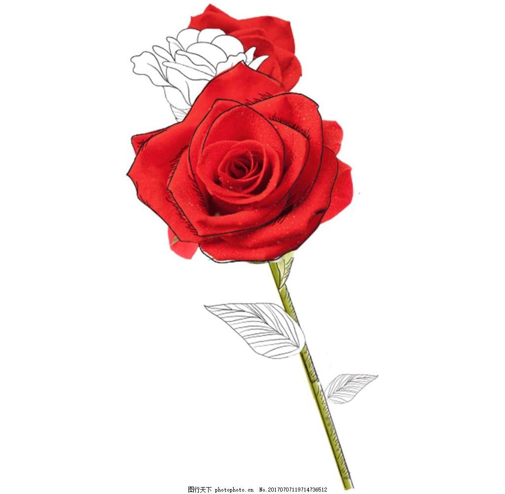 一朵玫瑰花png透明免扣