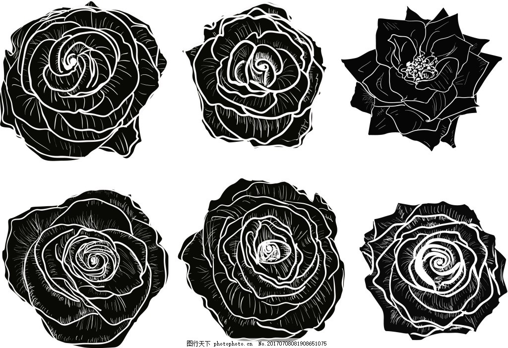 手绘黑白玫瑰花插画