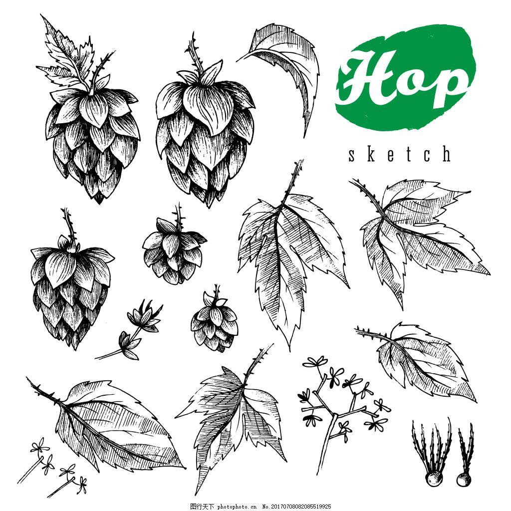 素描手绘啤酒花插画 植物 黑白 叶子