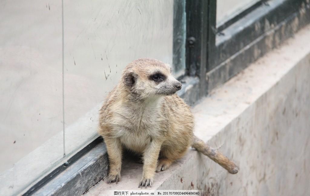 小浣熊 小动物 动物园 天津动物园 天津旅游 动物世界 摄影