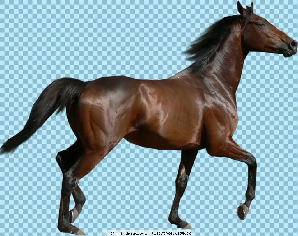 奔跑的马免抠png透明图层素材 海洋动物 可爱动物图片 家禽 家畜