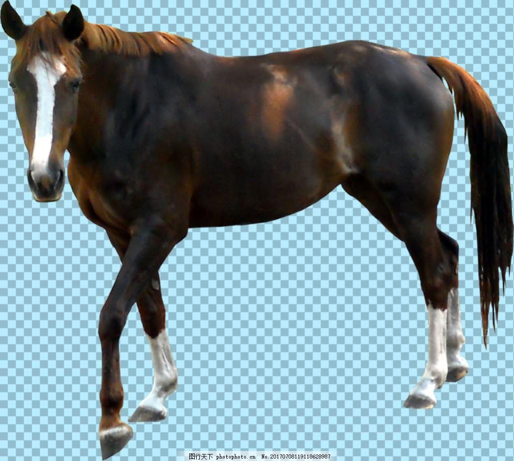 黑褐色毛发的马免抠png透明图层素材 家畜动物 可爱动物图片 家禽