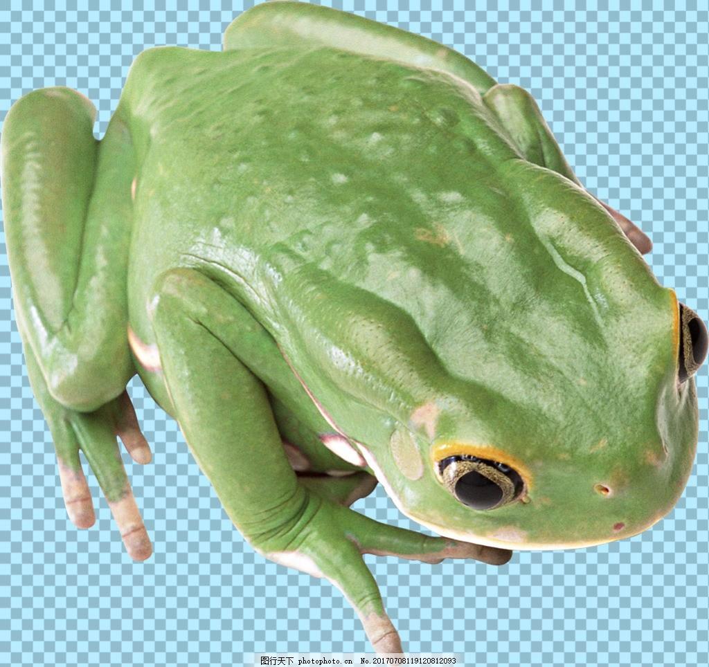 漂亮绿色青蛙免抠png透明图层素材 爬行动物 可爱动物图片 家禽