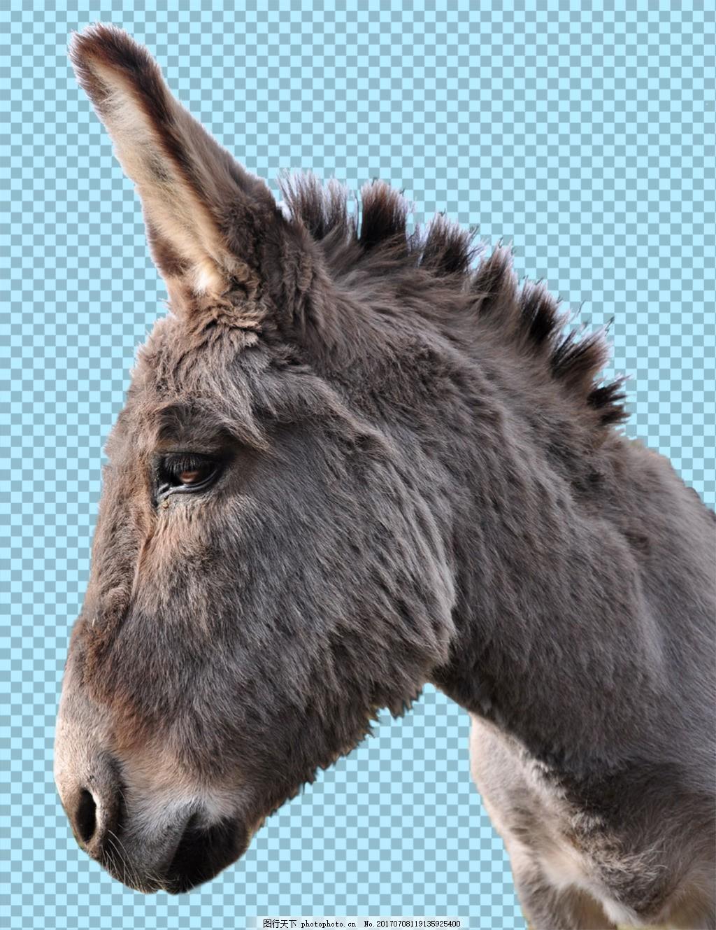 褐色毛发驴头图片免抠png透明图层素材 家畜动物 可爱动物图片 家禽