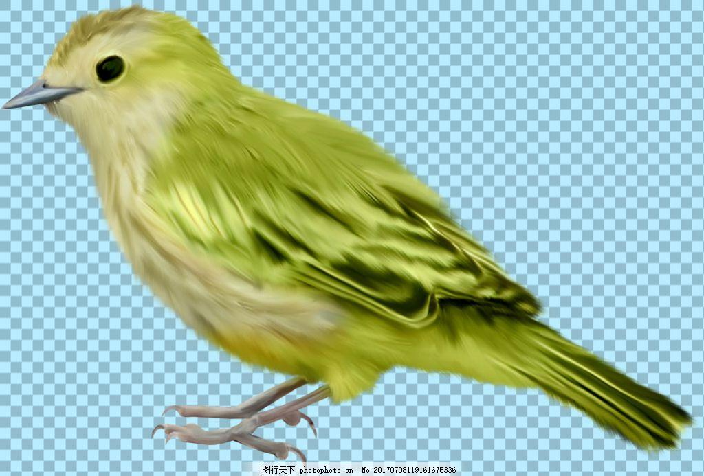 绿色翅膀小鸟图片免抠png透明图层素材 鸟类动物 可爱动物图片 家禽
