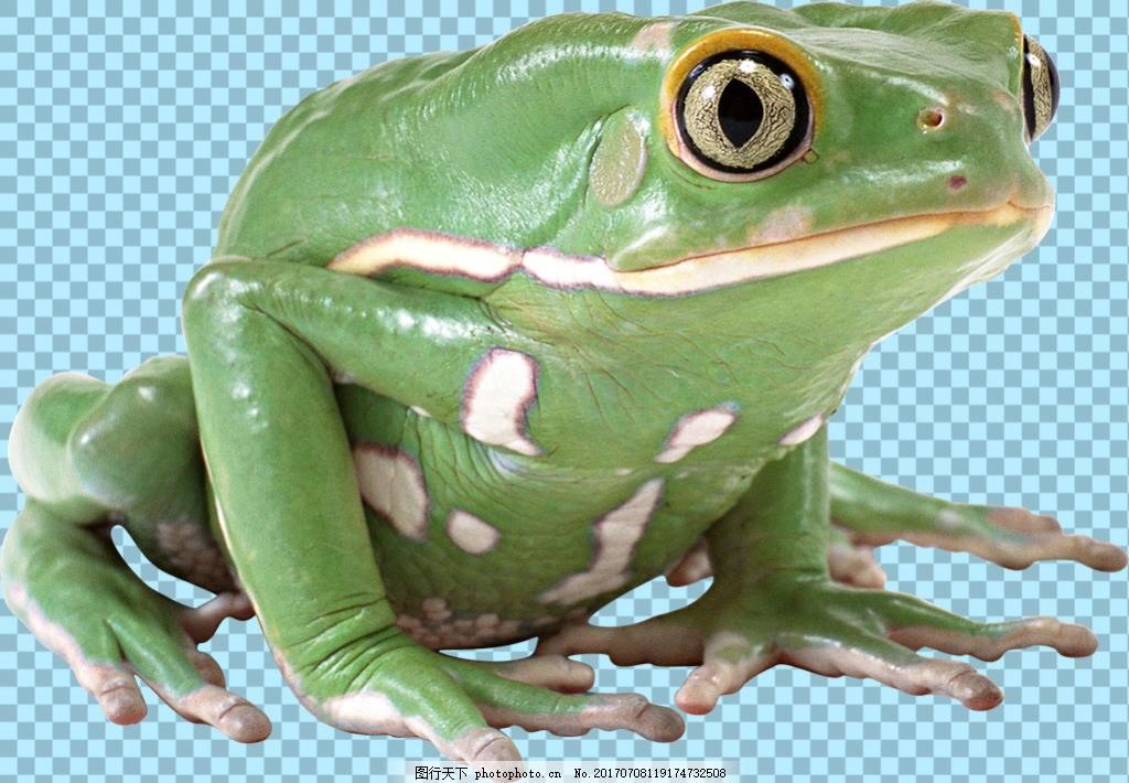 绿颜色青蛙免抠png透明图层素材 爬行动物 可爱动物图片 家禽