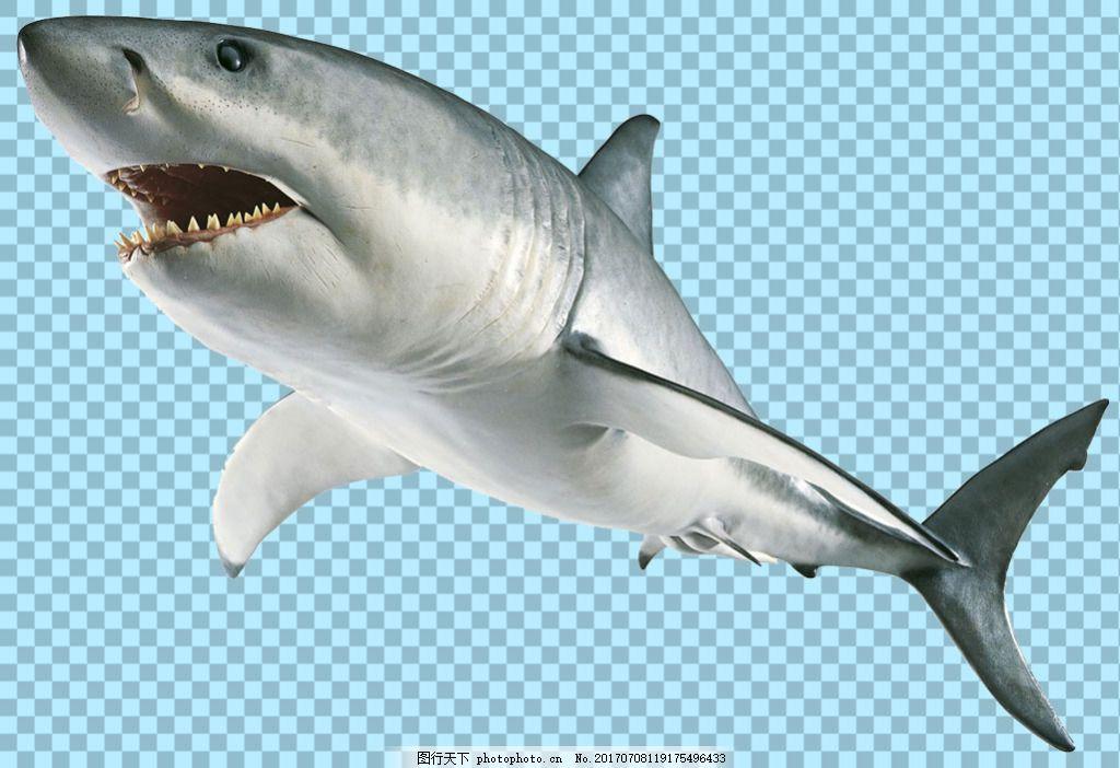 银色凶恶鲨鱼免抠png透明图层素材 海洋动物 可爱动物图片 家禽 家畜