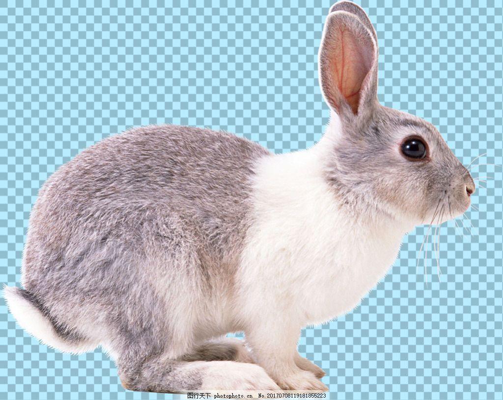 侧面兔子图片免抠png透明图层素材 可爱呆萌兔子 超萌可爱小兔子