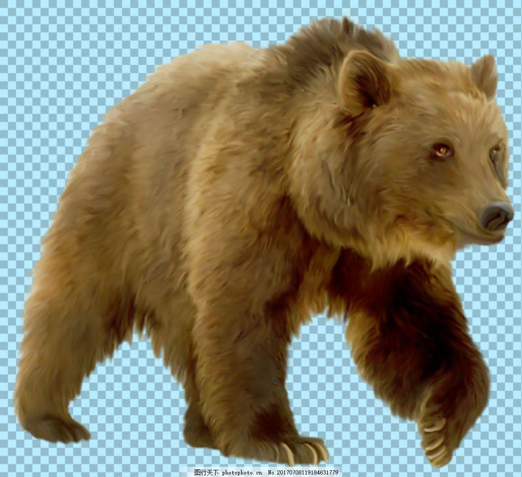 棕色走路的大熊图片免抠png透明图层素材 动物图片大全 可爱动物图片