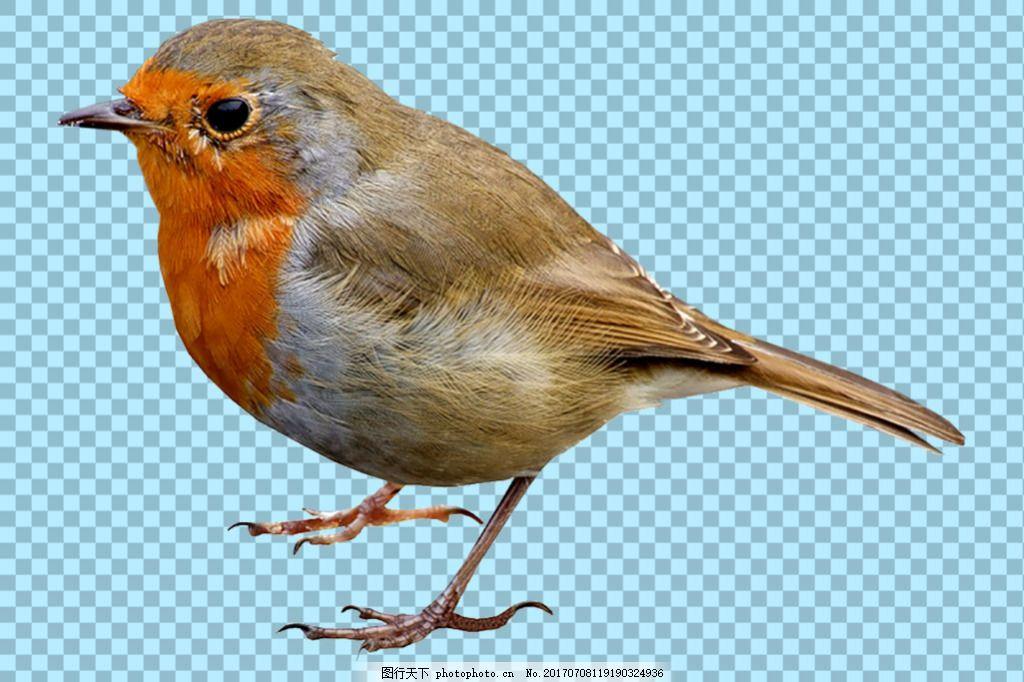 可爱小鸟图片免抠png透明图层素材 动物图片大全 可爱动物图片 家禽