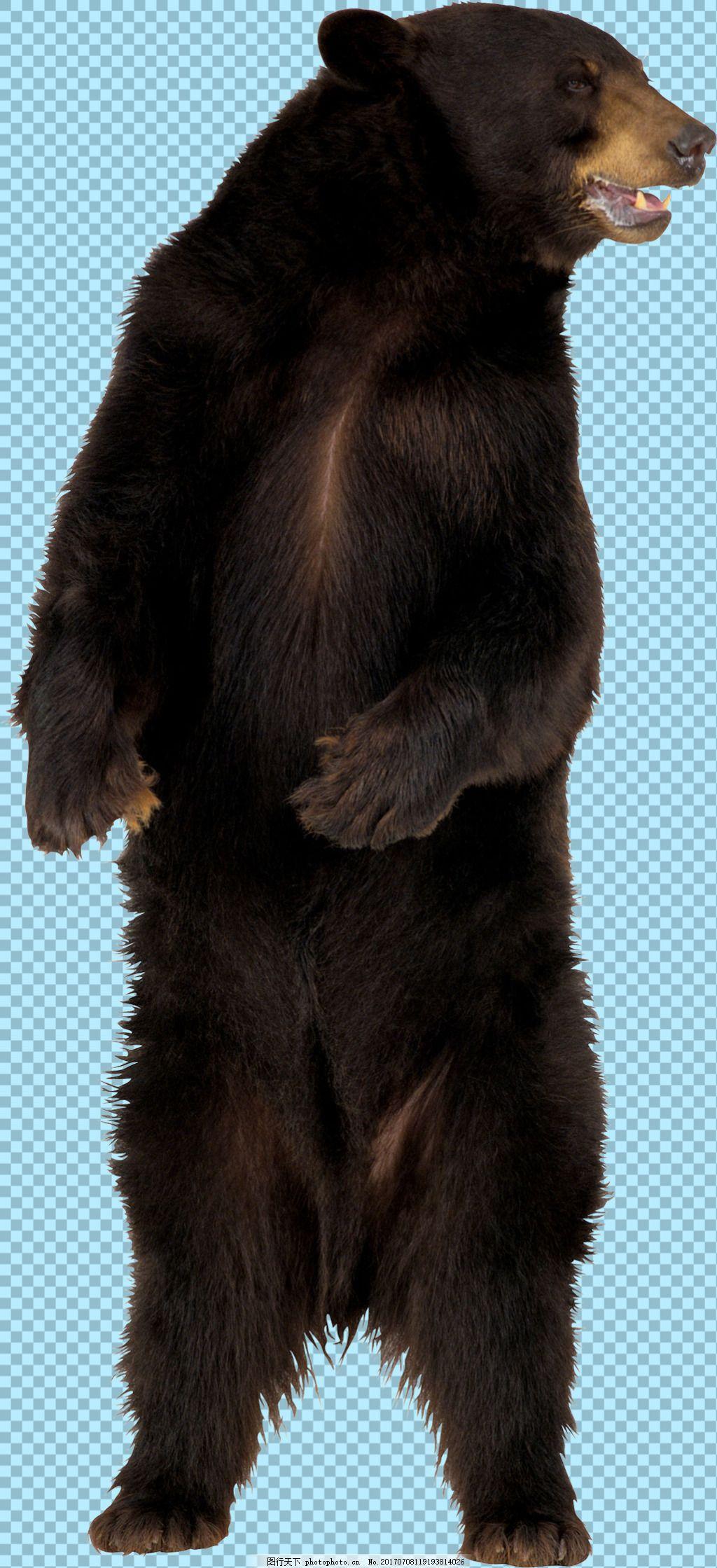 黑色站立的熊图片免抠png透明图层素材 动物图片大全 可爱动物图片