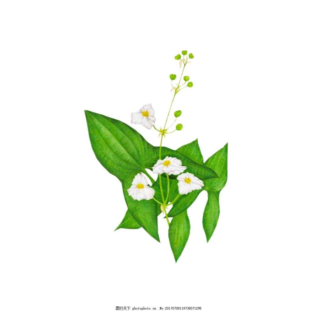 手绘绿叶花朵元素 清新 水墨 绿色树叶 白色花朵 免抠