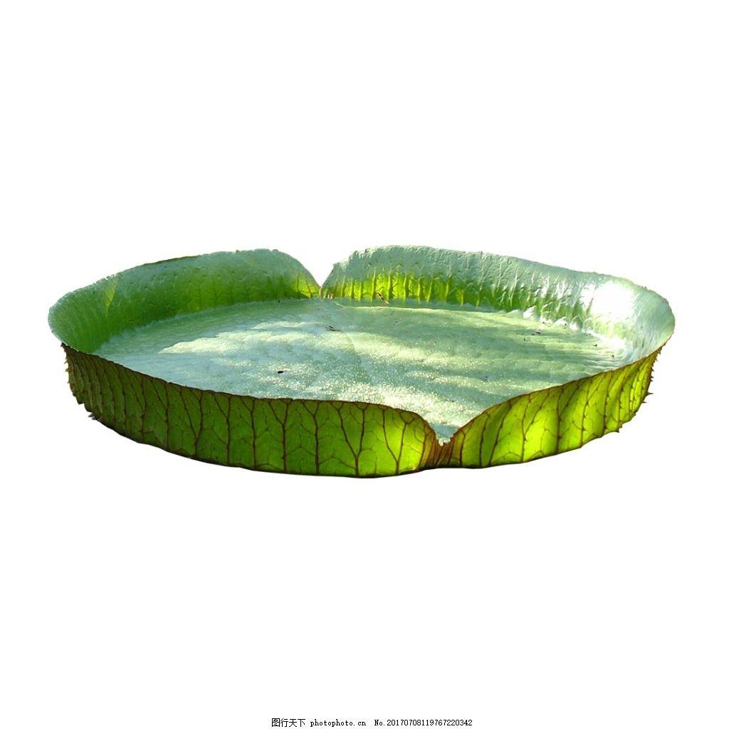清新绿叶圆形元素 绿色 清新 凉爽 圆形边框 青草 png 免抠 素材 png