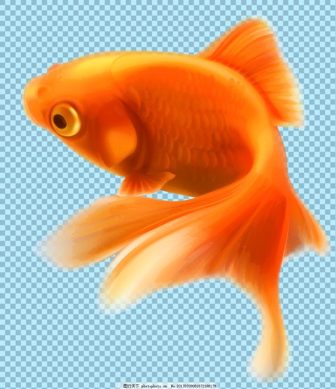 手绘橙色金鱼图片免抠png透明图层素材 鱼类动物 可爱动物图片 家禽