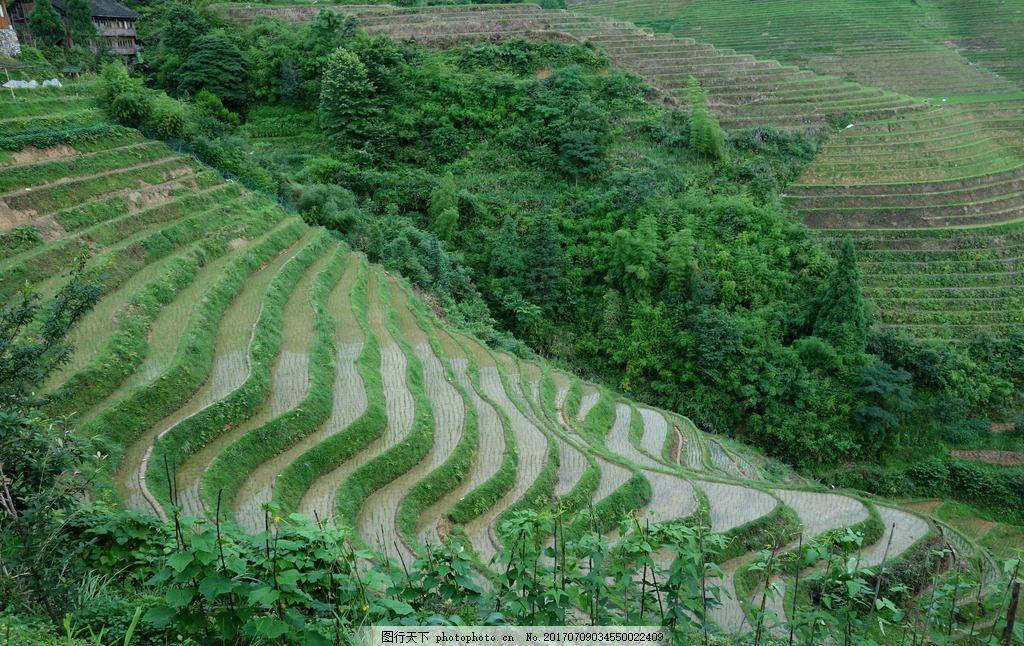 广西龙脊梯田 广西梯田 桂林 广西桂林 桂林风光 桂林风景 桂林摄影
