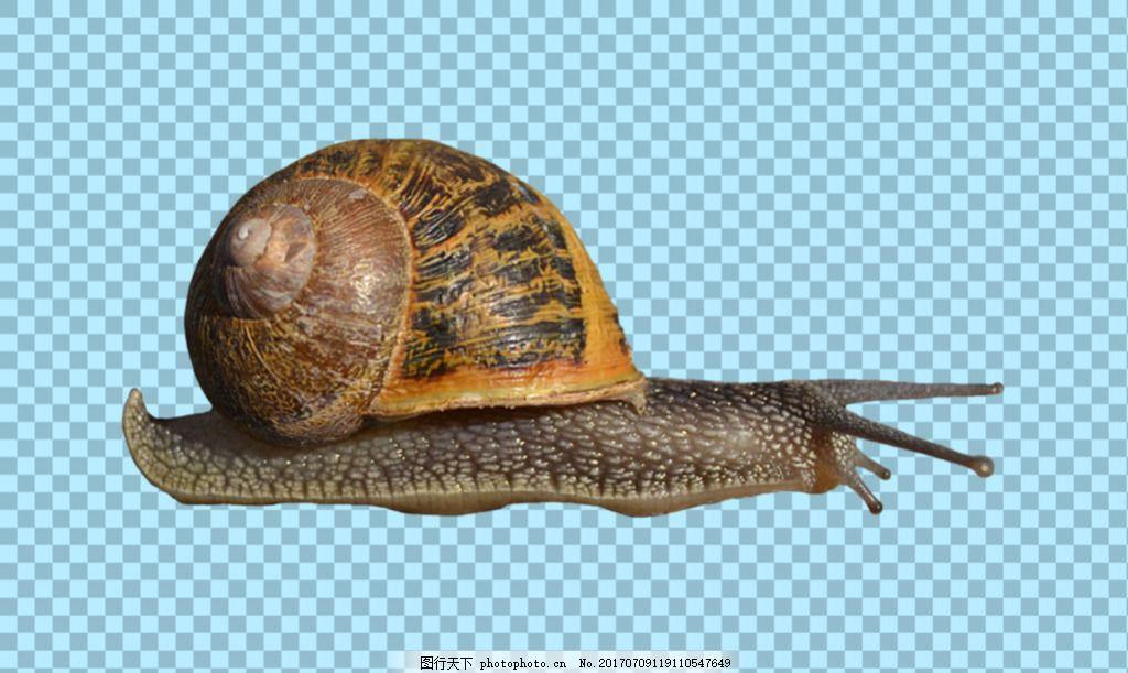 正在爬动的蜗牛免抠png透明图层素材 动物图片大全 可爱动物图片 家禽